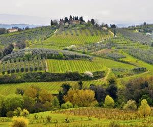 Winery and Resort in Chianti - Municipality of Florence